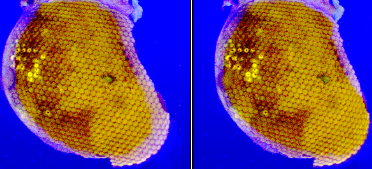 Stereo pair of images as viewed by fly eye