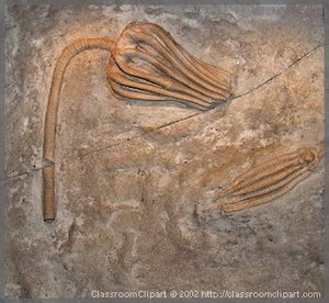 Fossil. Photo provided by Classroom Clipart (http://classroomclipart.com)
