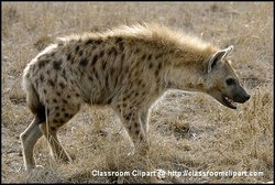 Hyena, Kenya Africa. Picture provided by Classroom Clip Art (http://classroomclipart.com)