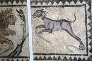This ancient mosaic shows a large dog with a collar hunting a lion.