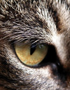 A close-up of a cat's .